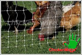 chicken net used for taking care hens