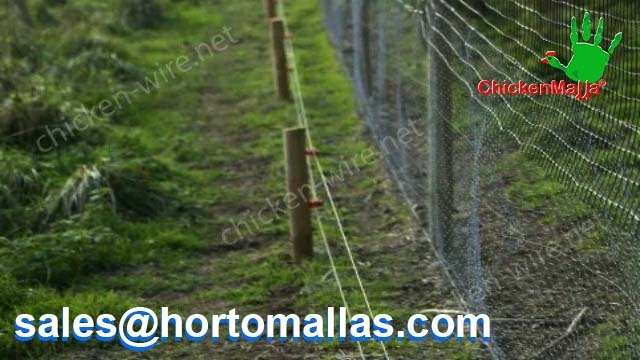 Outdoor chicken wire on forest application