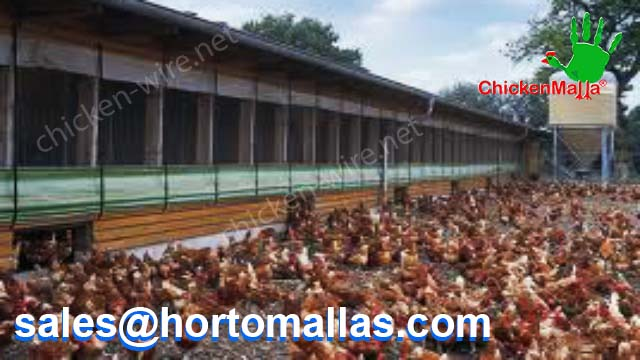 Outdoor free range chicken production using chicken wire