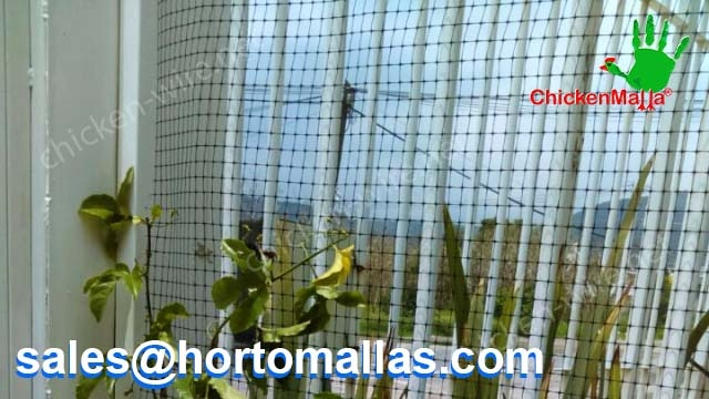 Using chicken wire at home fence on Passion flower