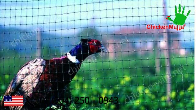 Pheasant caging with chicken wire