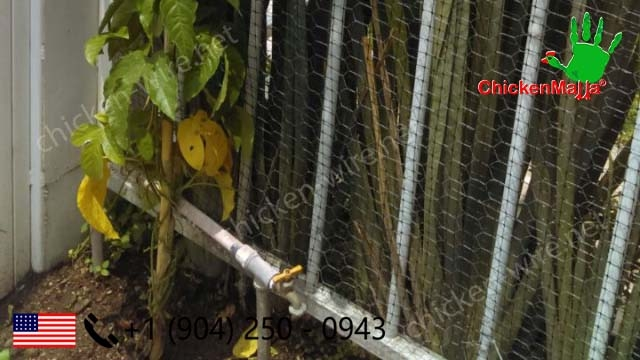 Protect your home trellis plants using chicken wire netting