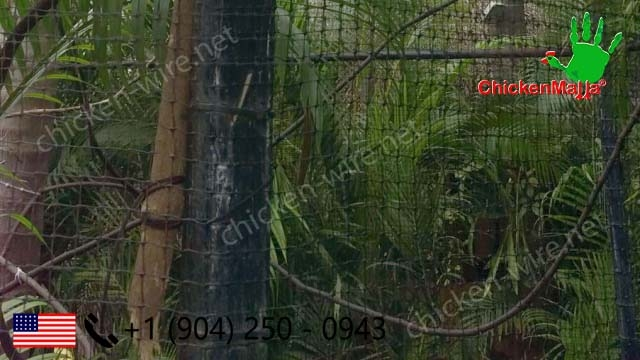 Use of chicken wire for exotic animal protection