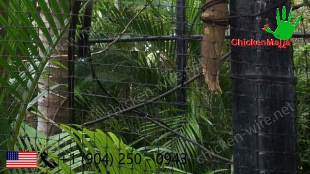 Exotic pets protected in garden using chicken wire