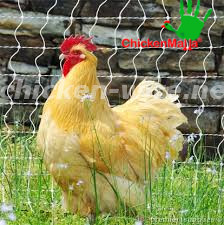 chicken with poultry net