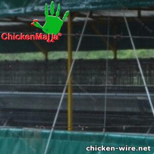 Chicken wire installed in a chicken coop