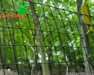 Chicken wire placed in a forest