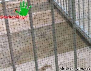 Chicken wire installed in iron grate