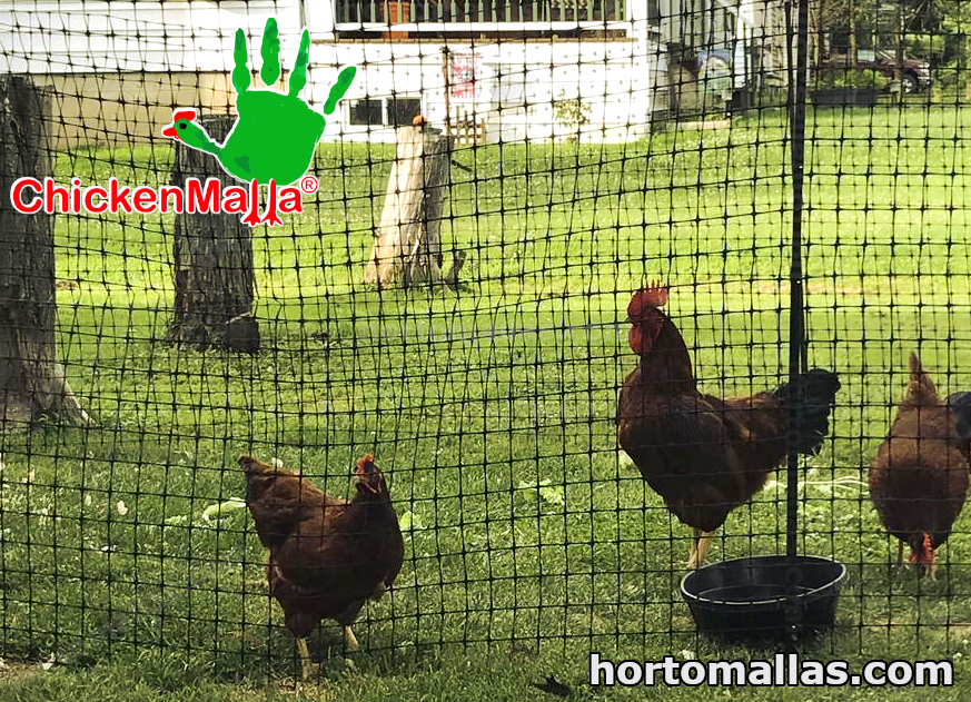Poultry nets for chickens